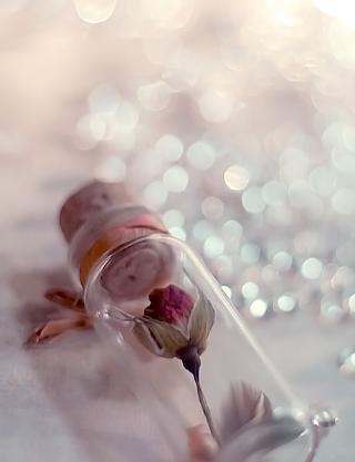 小清新意境唯美伤感治愈系可爱静物图片